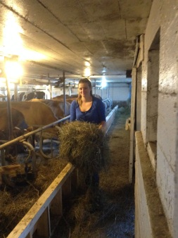 straw cow shed