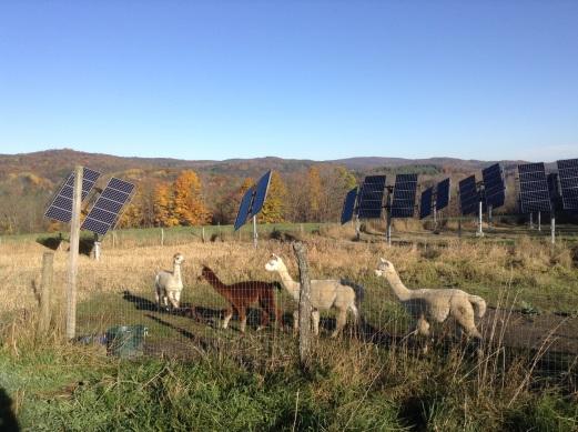 Sunny Putney, Vermont